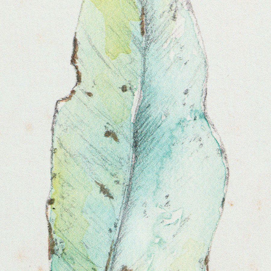 Cadre 4 herbiers à l'aquarelle