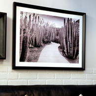 Tableau photo cactus