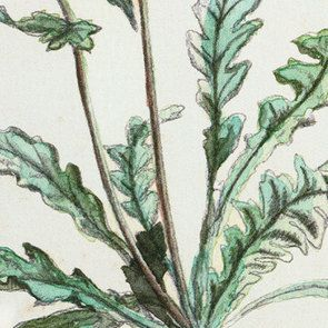 Cadre 4 herbiers à l'aquarelle - Visuel n°9