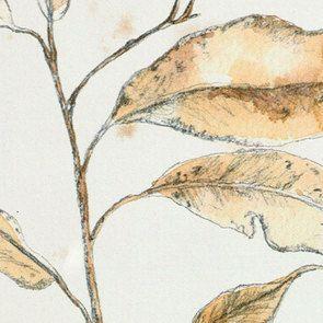 Cadre 4 herbiers à l'aquarelle - Visuel n°10