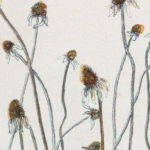 Cadre 4 herbiers à l'aquarelle - Visuel n°12