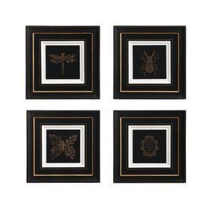4 gravures style cabinet de curiosité
