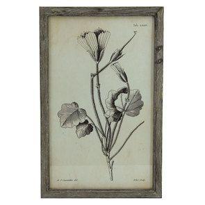 Tableau floral façon planche botanique 55 cm x 35 cm - Visuel n°1