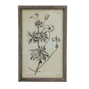 Tableau planche botanique motif floral 55 cm x 35 cm