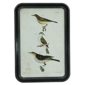 Tableau motif oiseaux façon gravure 50 cm x 35 cm