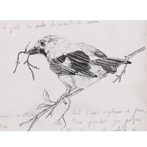 Gravure naturaliste motif geai 50x40 cm