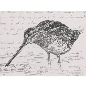 Gravure naturaliste motif bécasse  50x40 cm